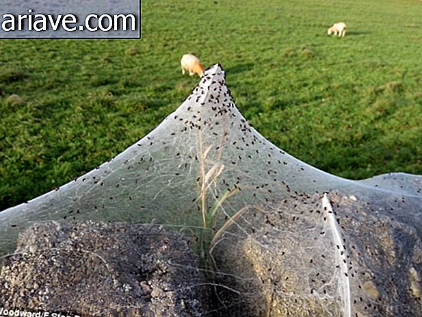Fear! Overnight a gigantic web formed on this farm